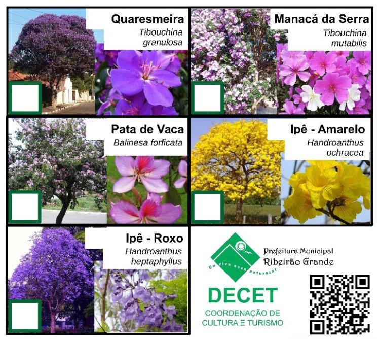 Árvore Símbolo do Município e Arborização Urbana Ribeirão Grande